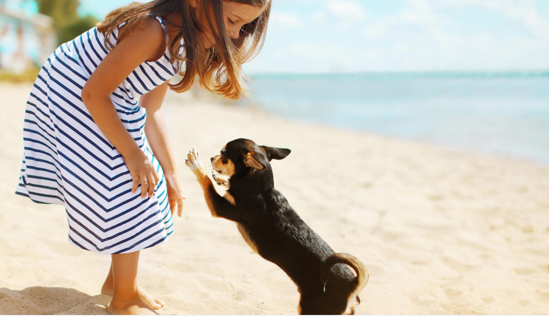 Miami Beach Welcomes Pet Lovers from Around the World with Collection of Four-Legged Friendly Resorts, Restaurants and Experiences
